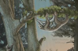 an illustration of the winged mammals by April I. Neander